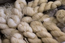 Wool soaking as part of the scouring process.