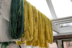 Weld-dyed wool hanging in the Greenhouse.