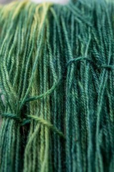The weld-indigo wool.